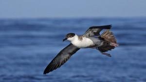 BirdwatchingSagres_g1_jorge_meneses