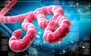 Results rule out Ebola suspicion in Portugal